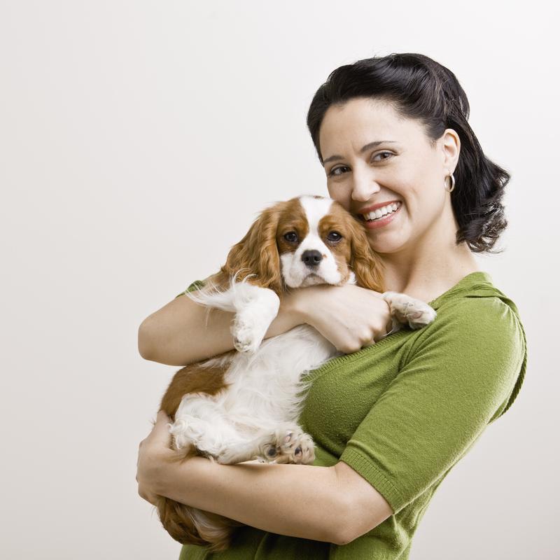 hundezucht alles f r hunde hundezucht einfach erkl rt. Black Bedroom Furniture Sets. Home Design Ideas